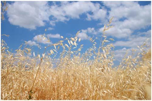 F3_oats.jpg