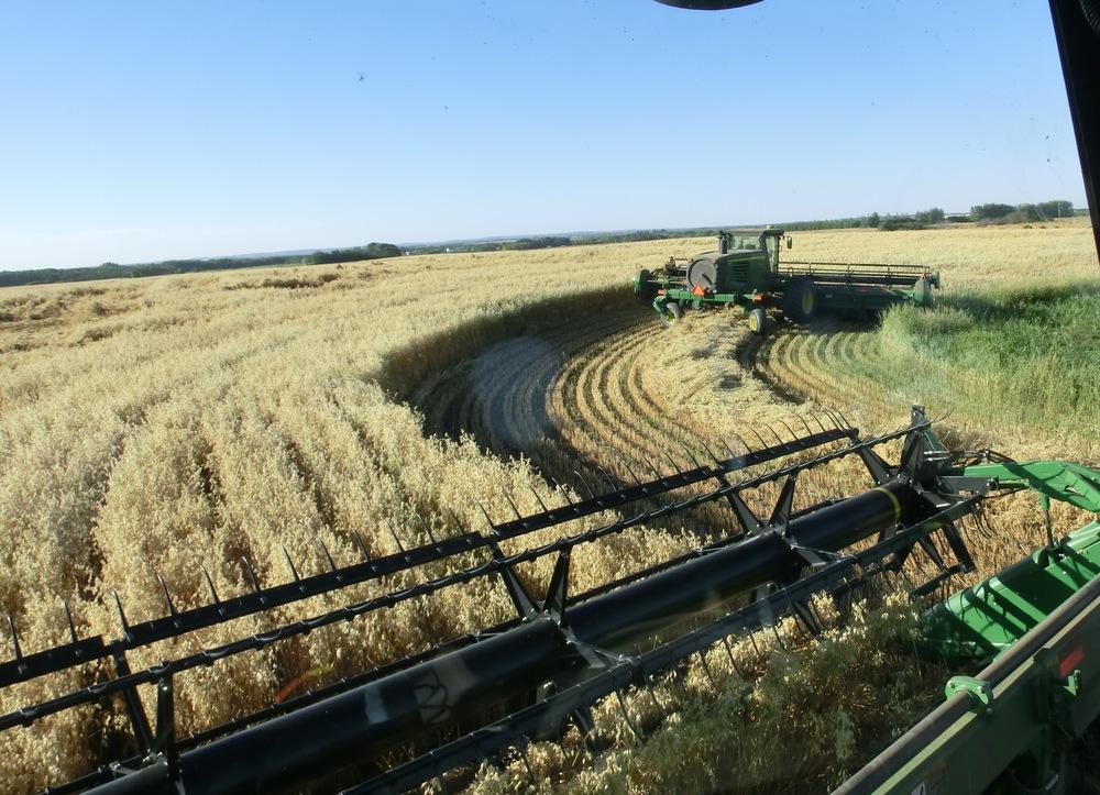 091  Swathing  oats.JPG