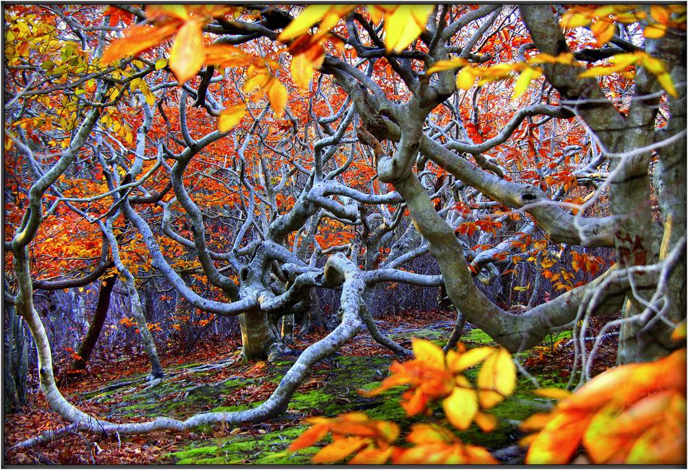 """Jungleland"" - taken at Cedar Tree Neck on the Vineyard."