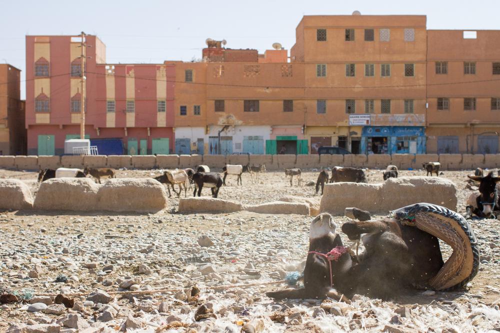 Eskogg_Morocco-28.jpg