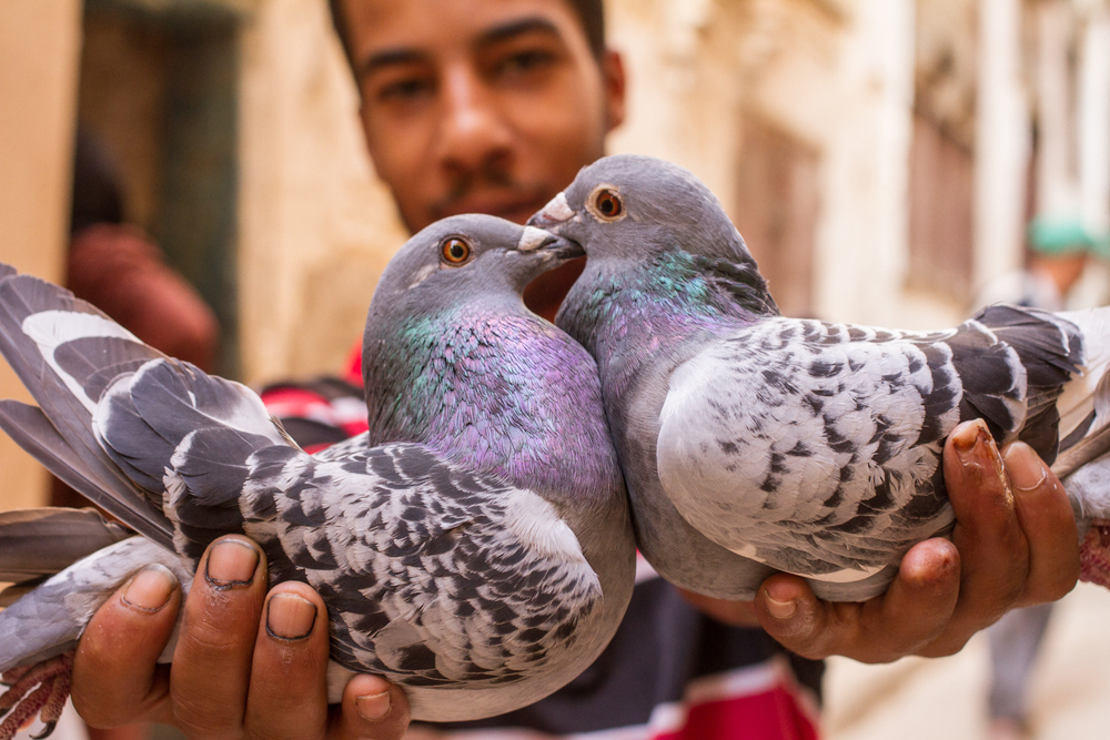 Eskogg_Morocco-59.jpg