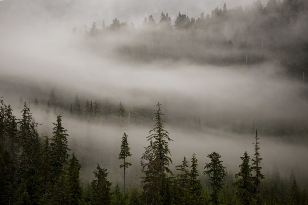 Views from the Sea Lion of early morning fog rising off of a spruce forest in Alaska's Inside Passage.