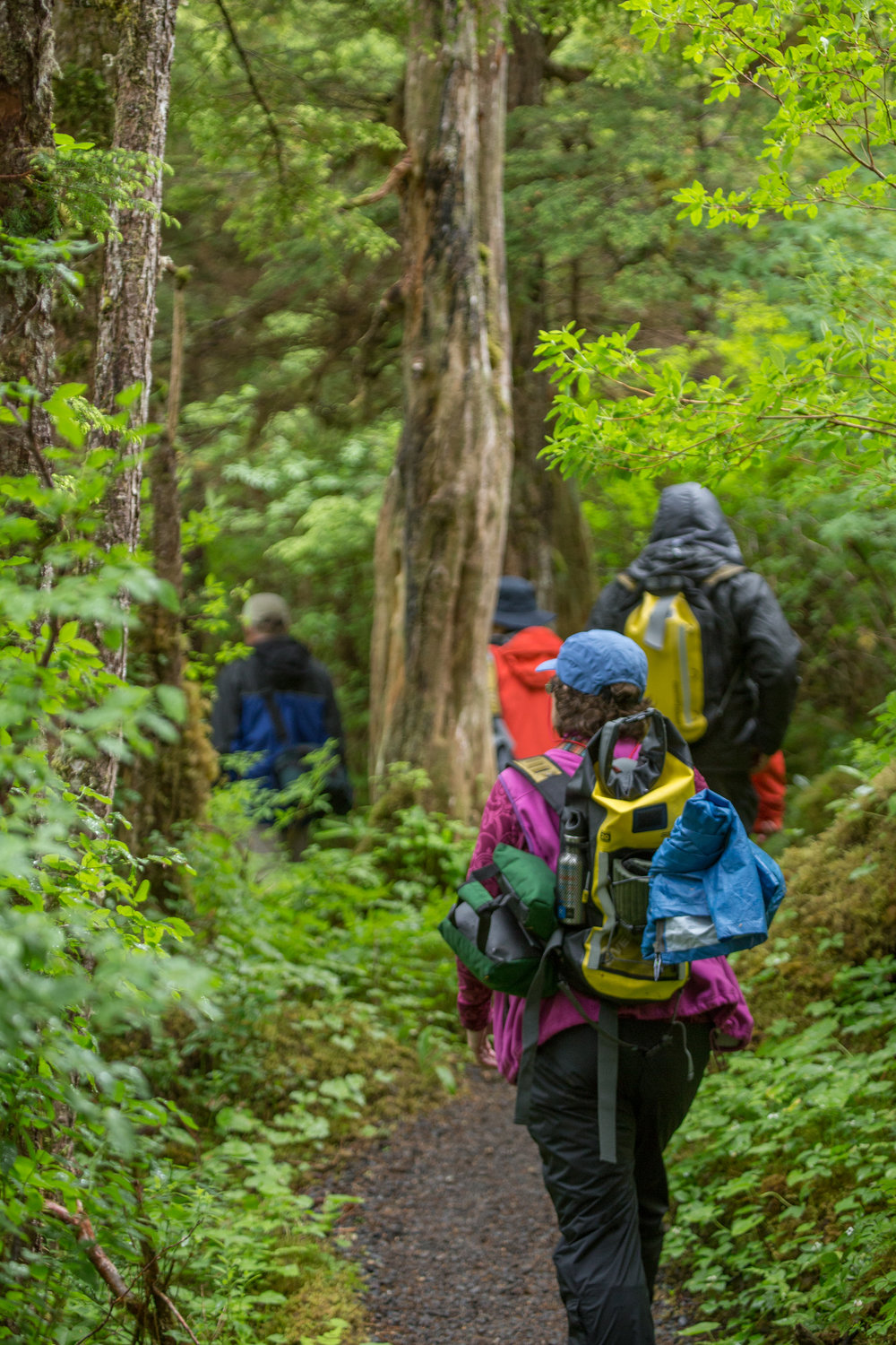 Small group of Sea Lion passengers hiking through temperate rain forest in Alaska.