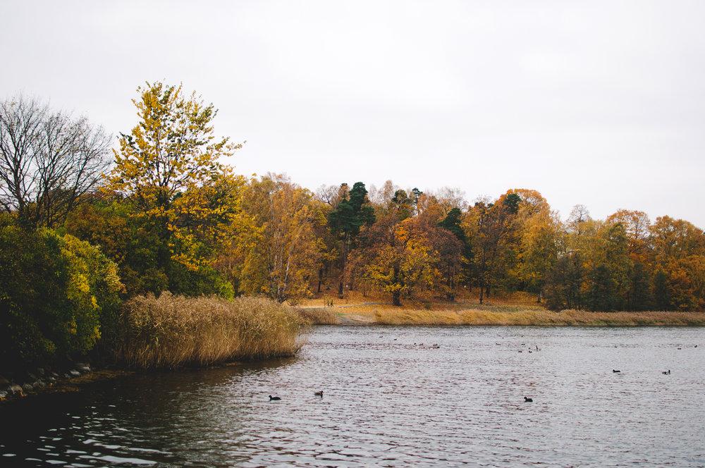 marta-vargas-autumn-stockholm-4335.jpg