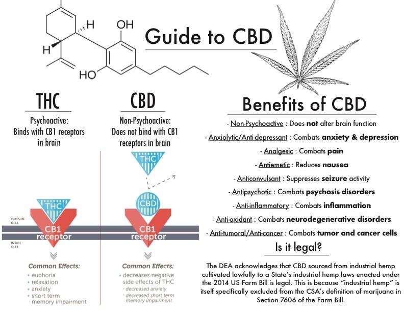 cbd guide.jpg