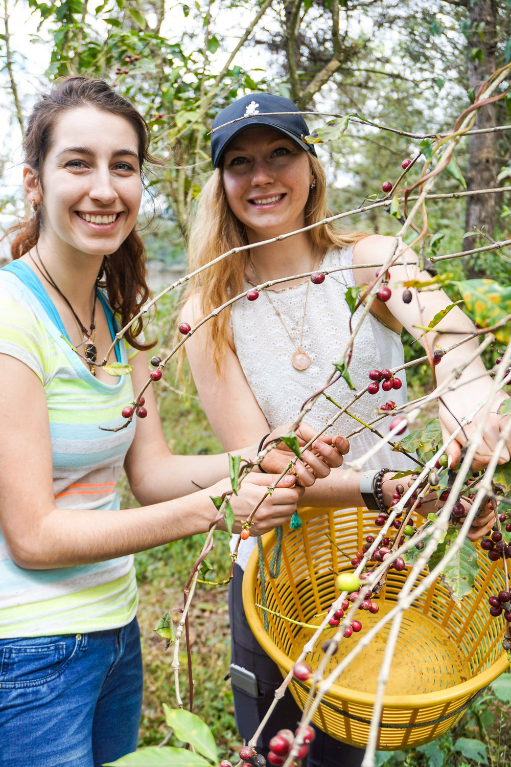 Brittany Sheehan and Megan Reimel picking coffee.jpg