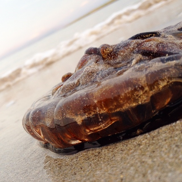 Jellyfish on the beach.
