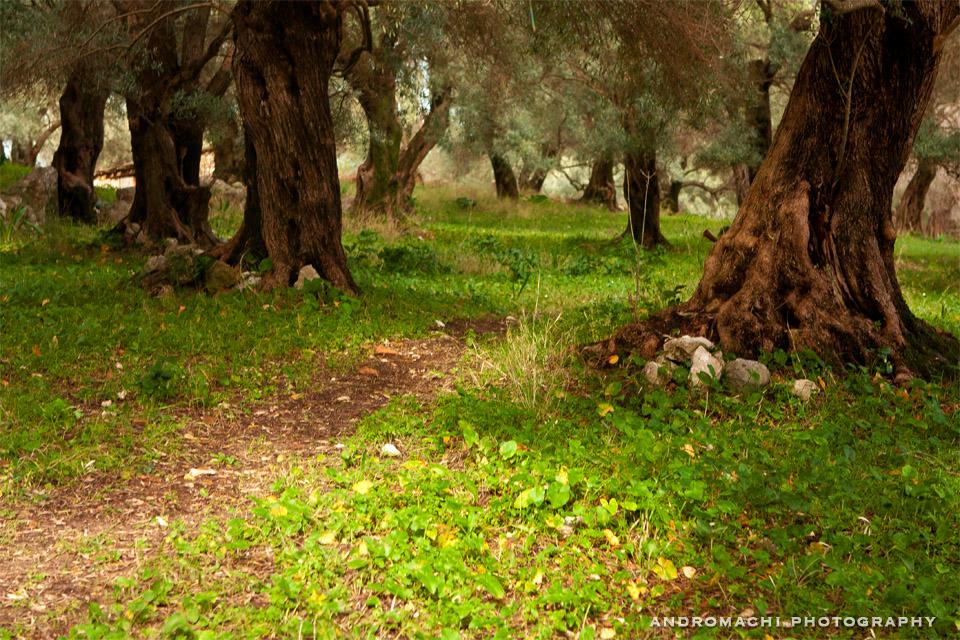 After rain walk in ancient Nirikos