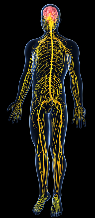 truHealth Specific Chiropractic Studio Upper Cervical Chiropractic Nervous System