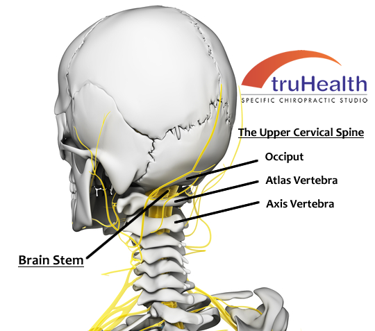 Upper Cervical Spine Labeled Model.png