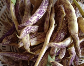 Dragon tongue beans
