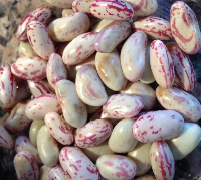 Shelled cranberry beans