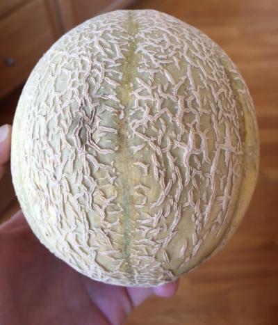 A Sugar Cube melon