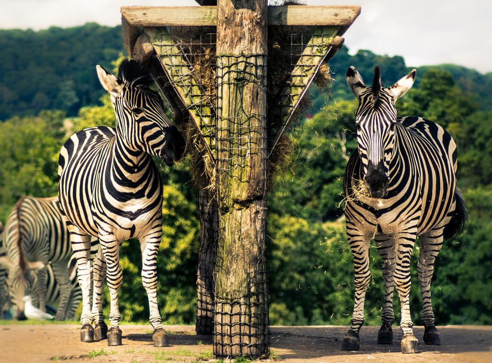 safari-5.jpg
