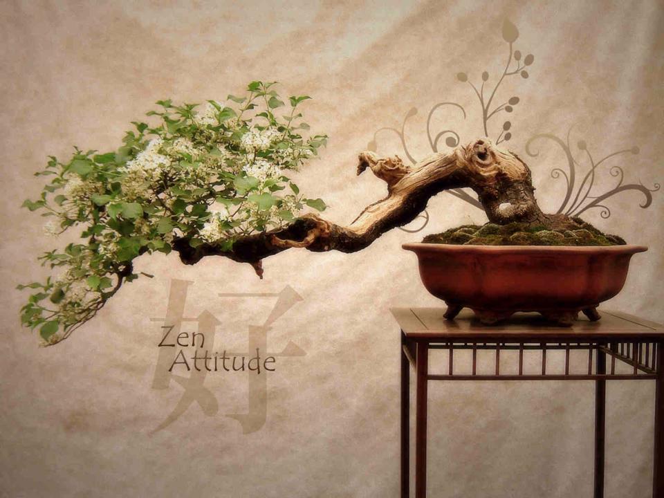 ZenAttitude.jpg