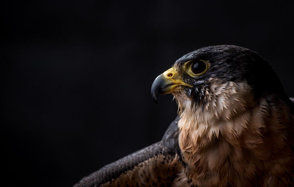 Gabe Border-bird (1 of 1).jpg