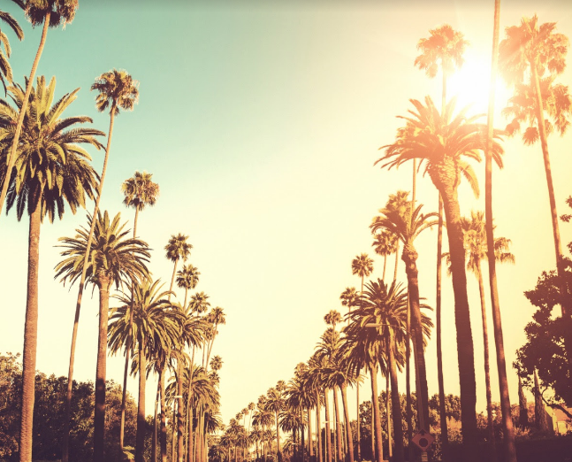 los-angeles-palms