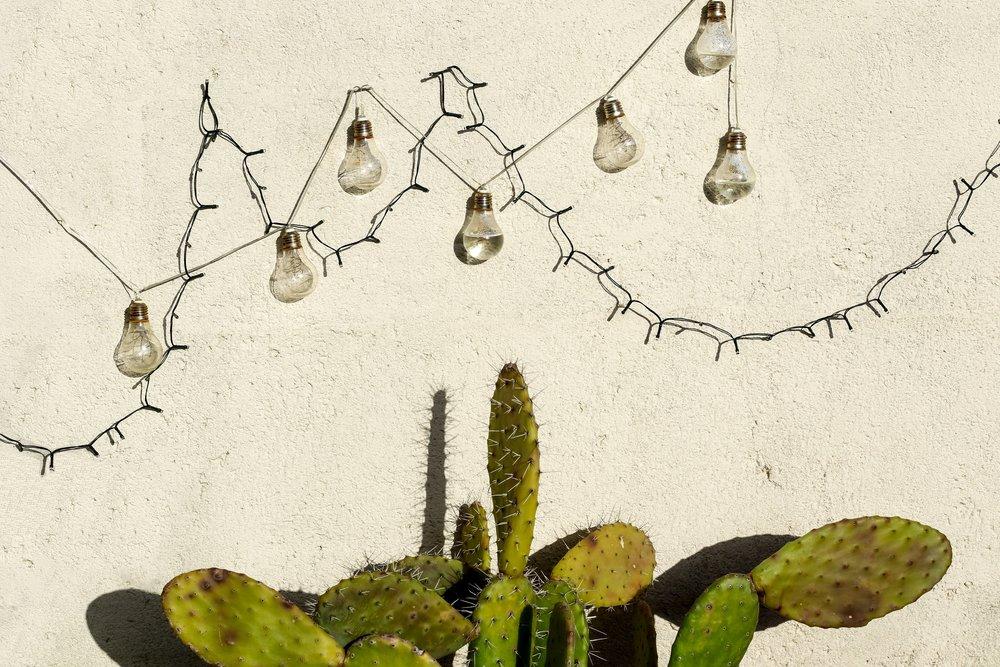 silverlake-cactus