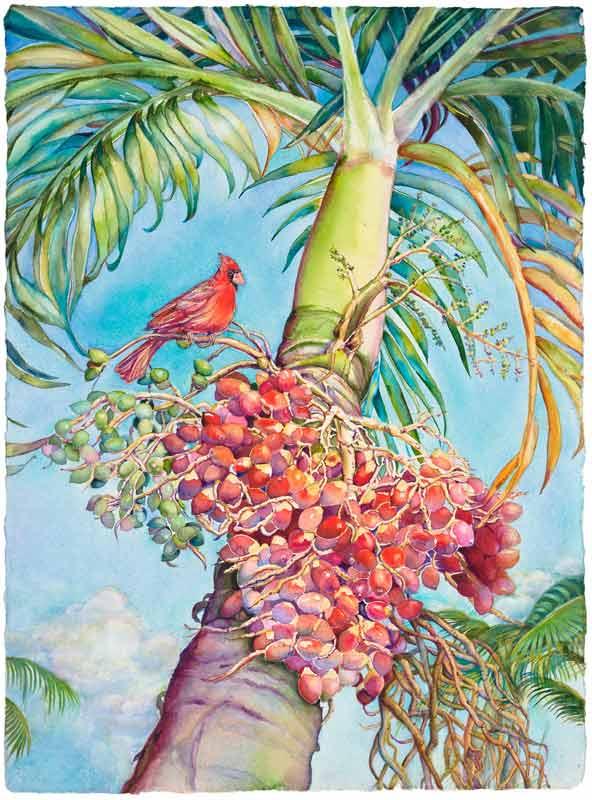Cardinal and Christmas Palm