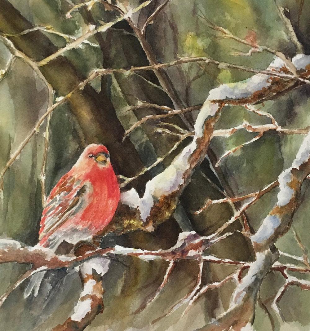 "Pine Grossbeak 11.5""x11"" - Julie McIntyre"