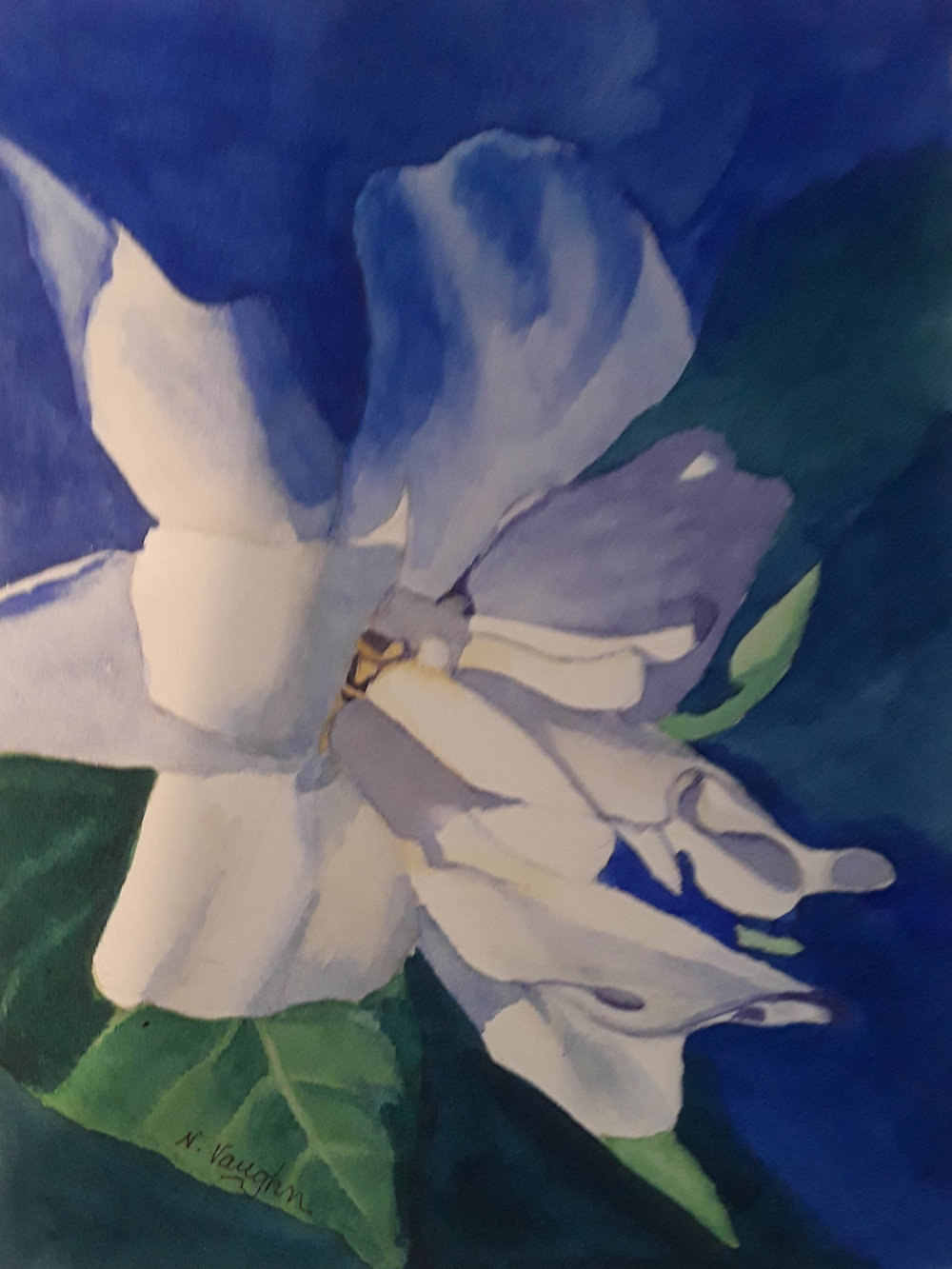 "Gardenia 7"" x 5"" - Nancy Vaughn"