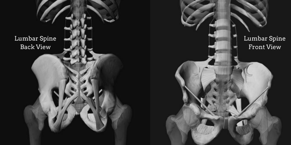 Limber Lumbar Experiential Anatomy Domini Anne