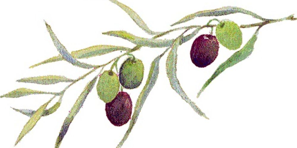 olive.branch 1000x500.png