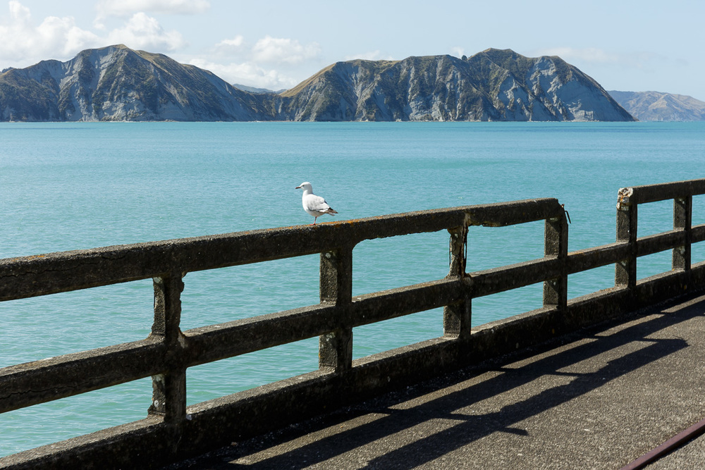 A seagull watches the day pass by at Tolaga Bay.