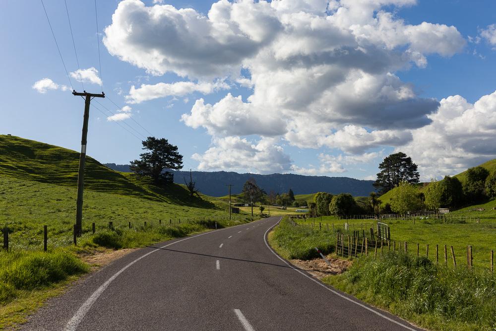 Whirinaki Valley, south of Rotorua.