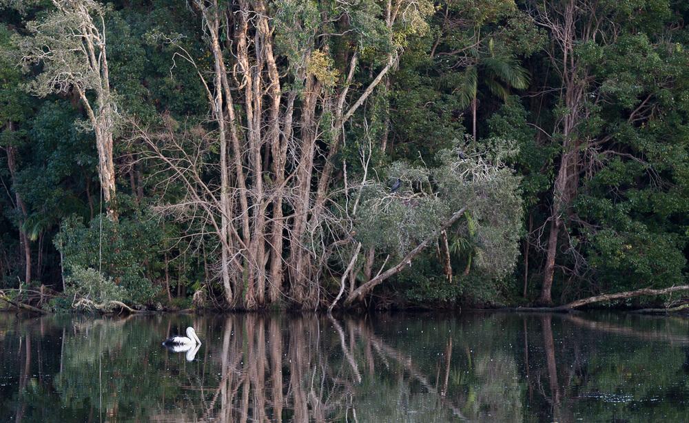 Ballina, NSW