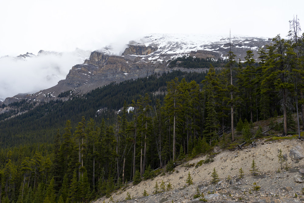 Trees, rock and snow. Icefields Parkway, AB