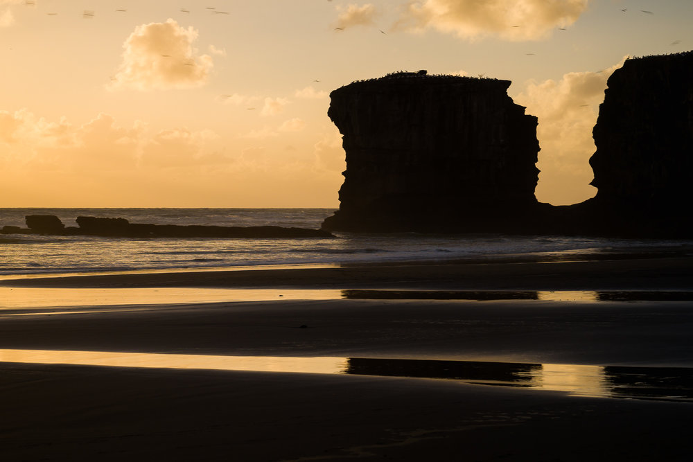 Maori Bay, west of Auckland.