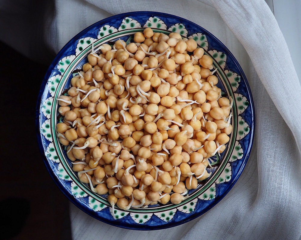 sprouted chickpeas