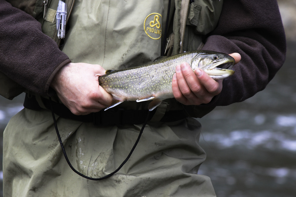 jim fish 1.jpg