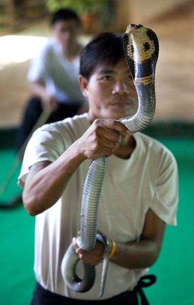 Snake handler, Chiang Mai, Thailand.