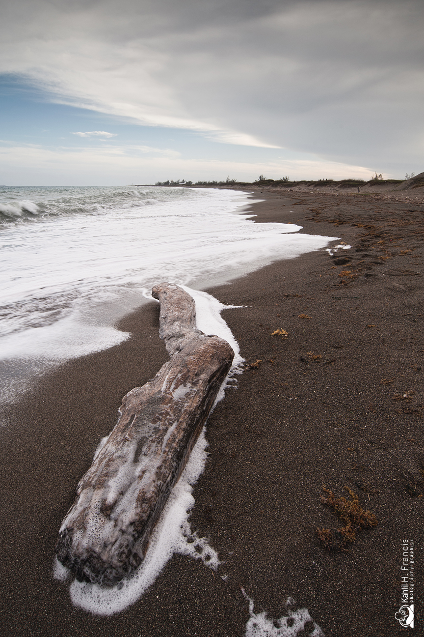 Driftwood - Palisadoes