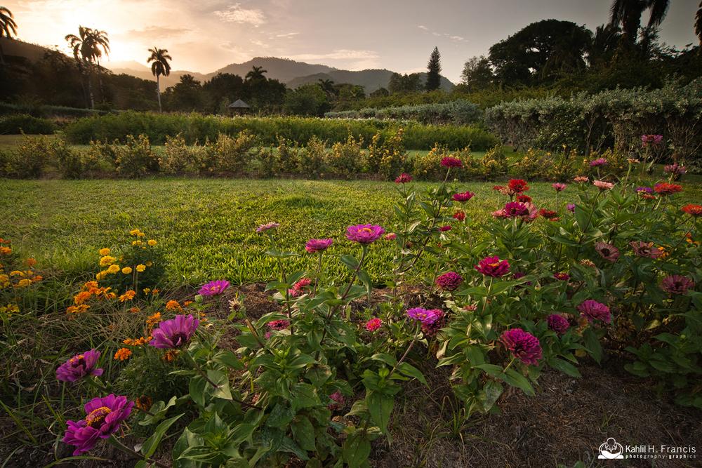 Blooms of the Garden