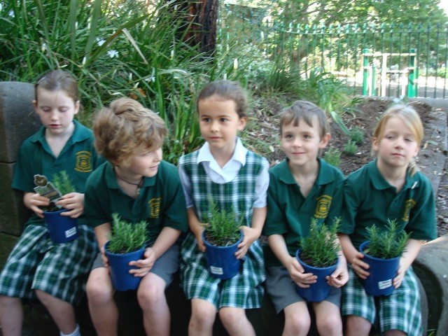 In 2009 a group of students helped plant Gallipoli Rosemary at our school!    Find out more