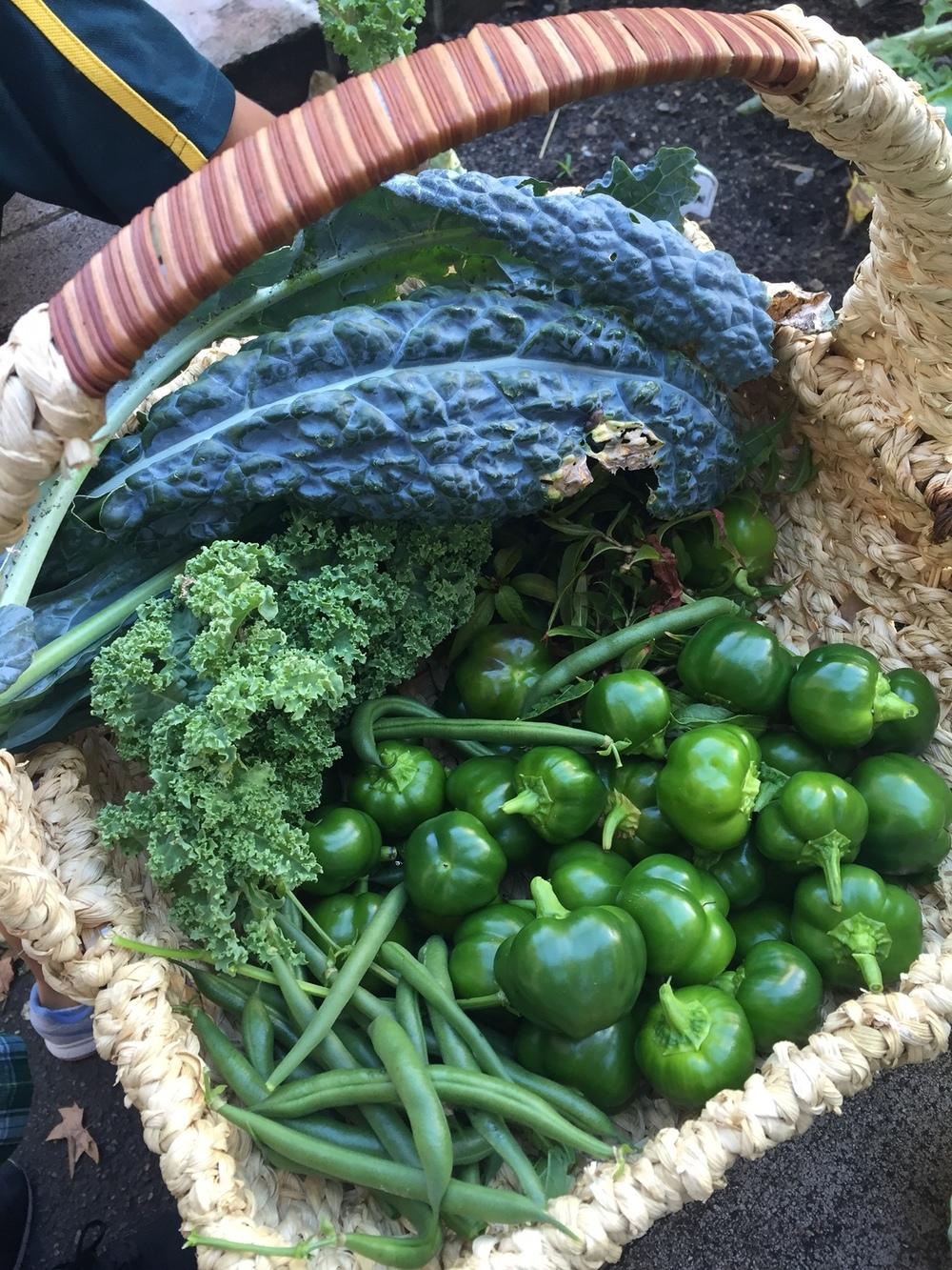 Our Kitchen Garden Welcome To Crown Street Garden