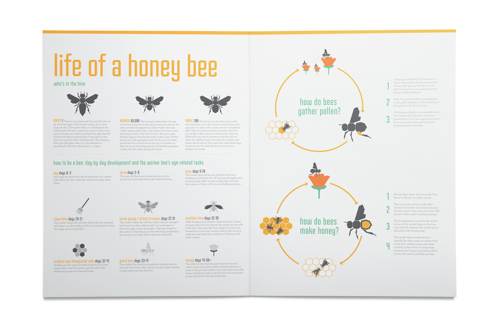 This spread gives the background to the lives of honey bees, and the roles that each type of bee plays within the hive.
