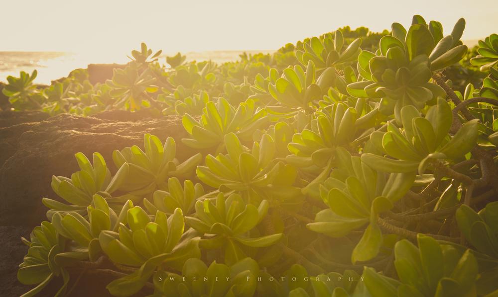 Poipu leafs.jpg