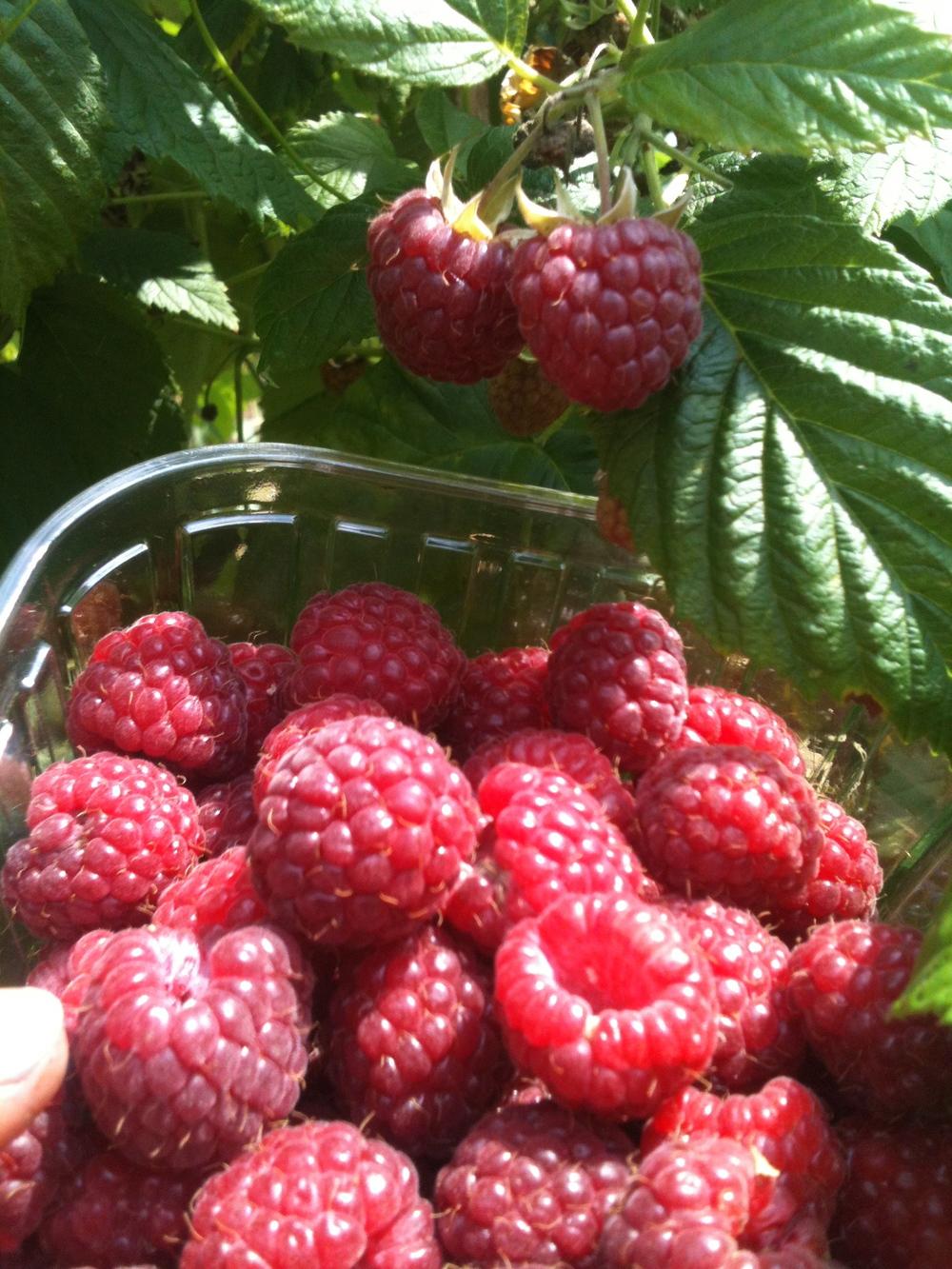 Groenten fruit en kruidenplanten de ommuurde tuin for Groenten tuin