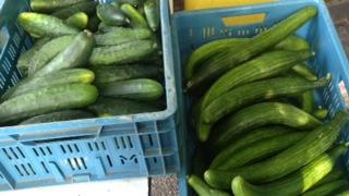 Oerkomkommers en gewone lange komkommers, ze doen het allebei geweldig.