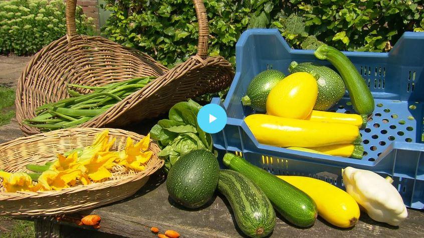 Bekijk hier de aflevering van BinnensteBuiten over de Ommuurde Tuin!