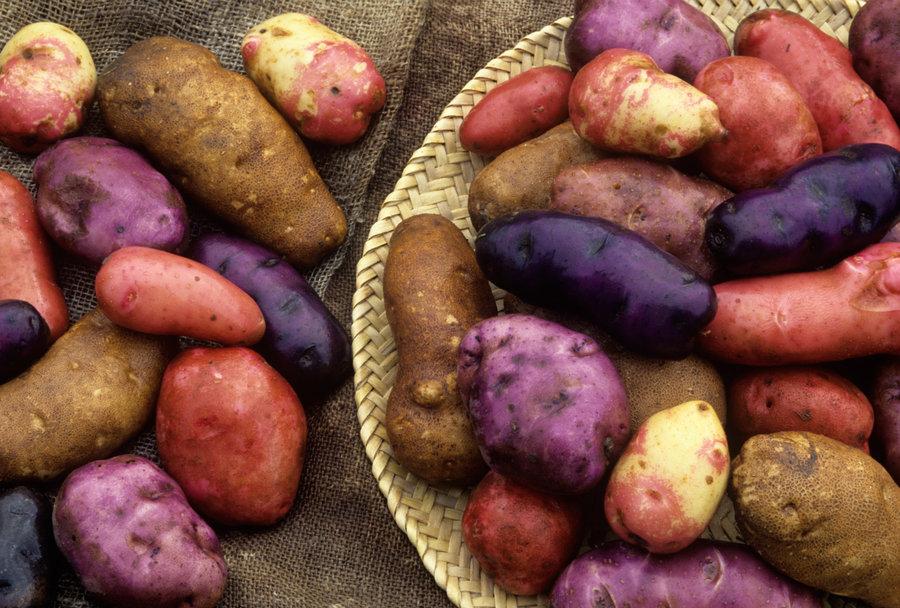 aardappelrassen.jpg
