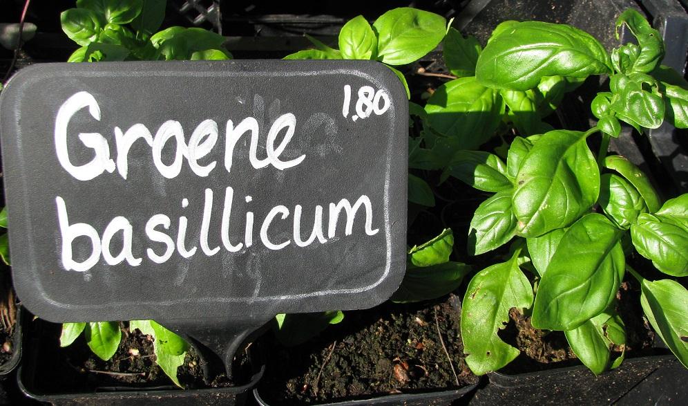6. Groene Basilicum.jpg