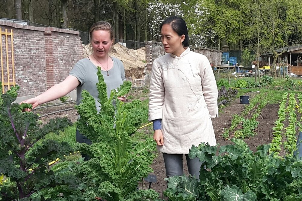 Peasant-to-peasant knowledge sharing. CSA pioneer  Shi Yan  from China visits the Ommuurde Tuin.