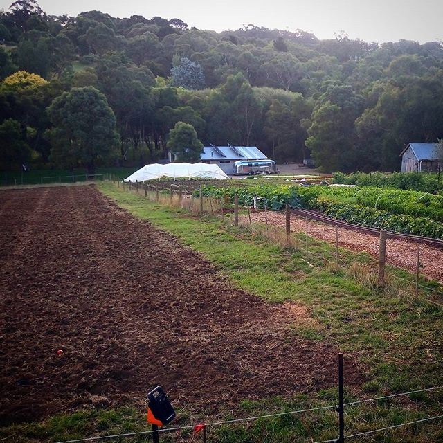 This week we started to prep a large plot in the paddock that will just about DOUBLE our veg growing powers. Good gourd! What have we done?! @mikedensham @berryfeather @smallgiants #organic #farming #madness  #farmlife #csa #lovinglife