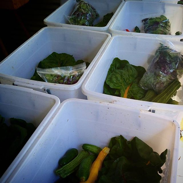 Loading up fresh picked goodies ready for the big smoke folk. Enjoy all your summery goodness! @mikedensham @berryfeather @smallgiants #smallscalefarming #organic #marketgarden #goodies #csa