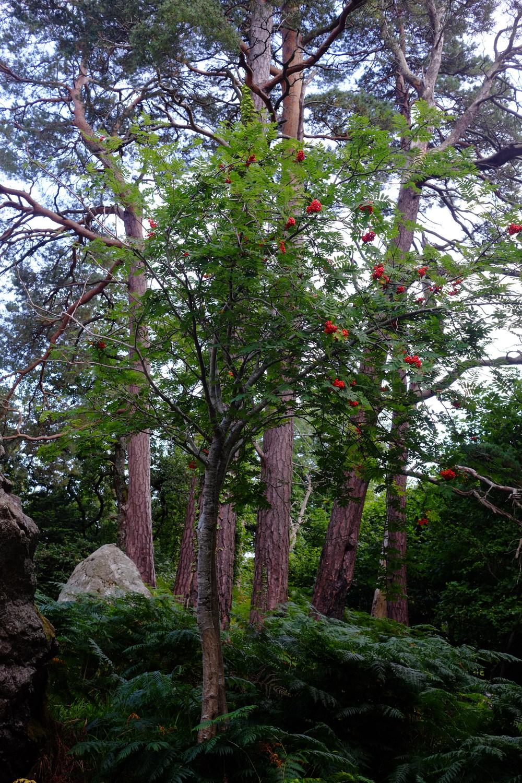 ellieberry